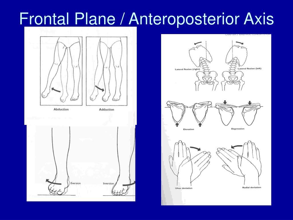 Frontal Plane / Anteroposterior Axis