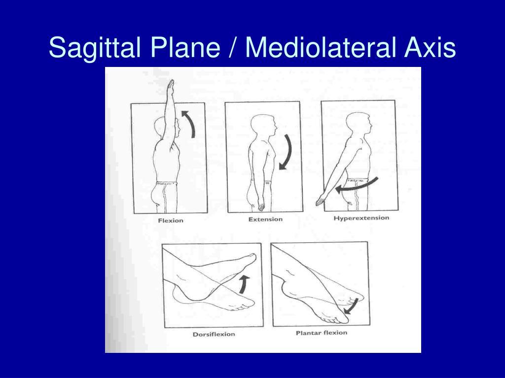 Sagittal Plane / Mediolateral Axis