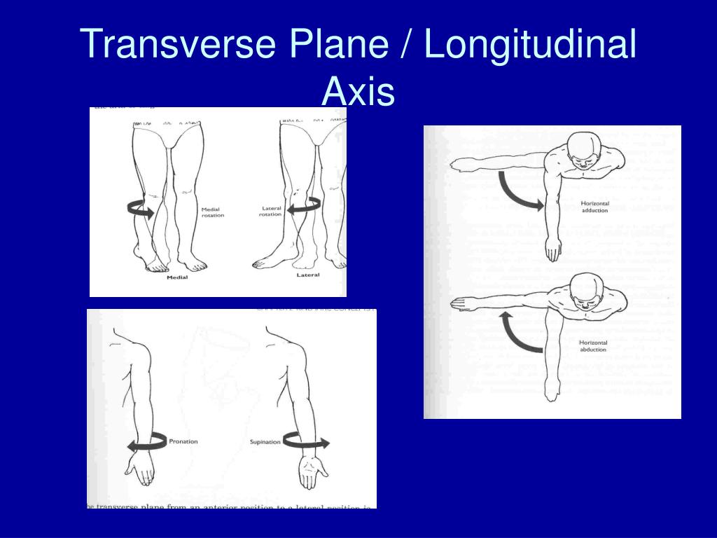 Transverse Plane / Longitudinal Axis