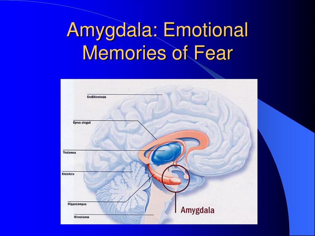 Amygdala: Emotional Memories of Fear