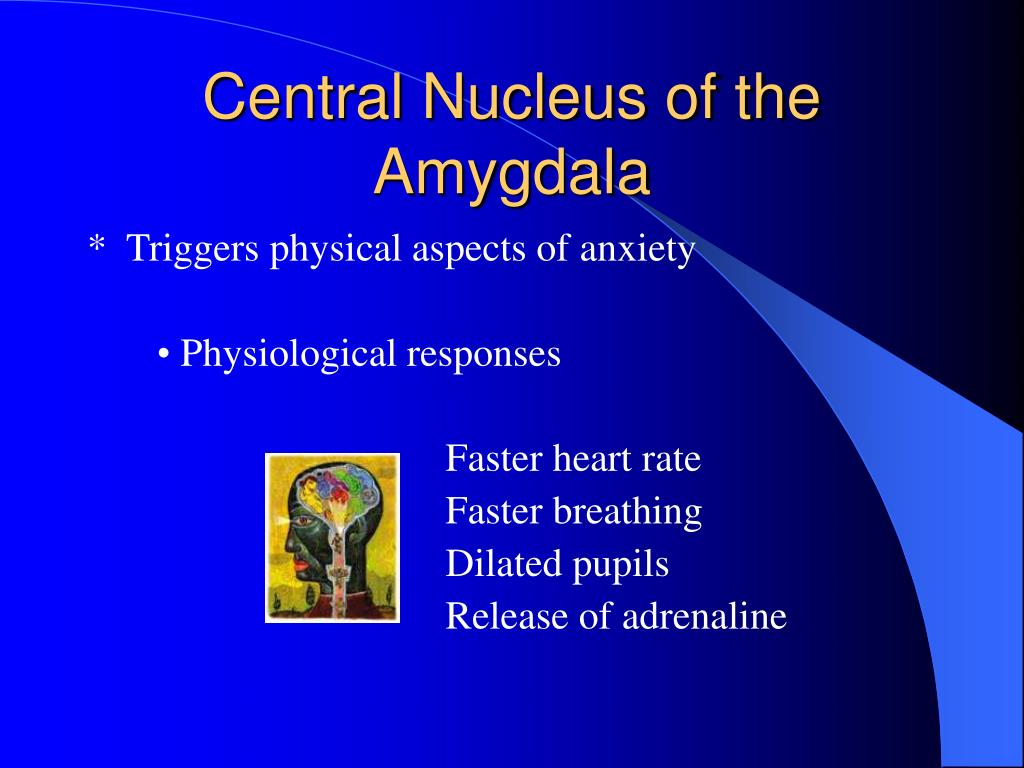 Central Nucleus of the Amygdala