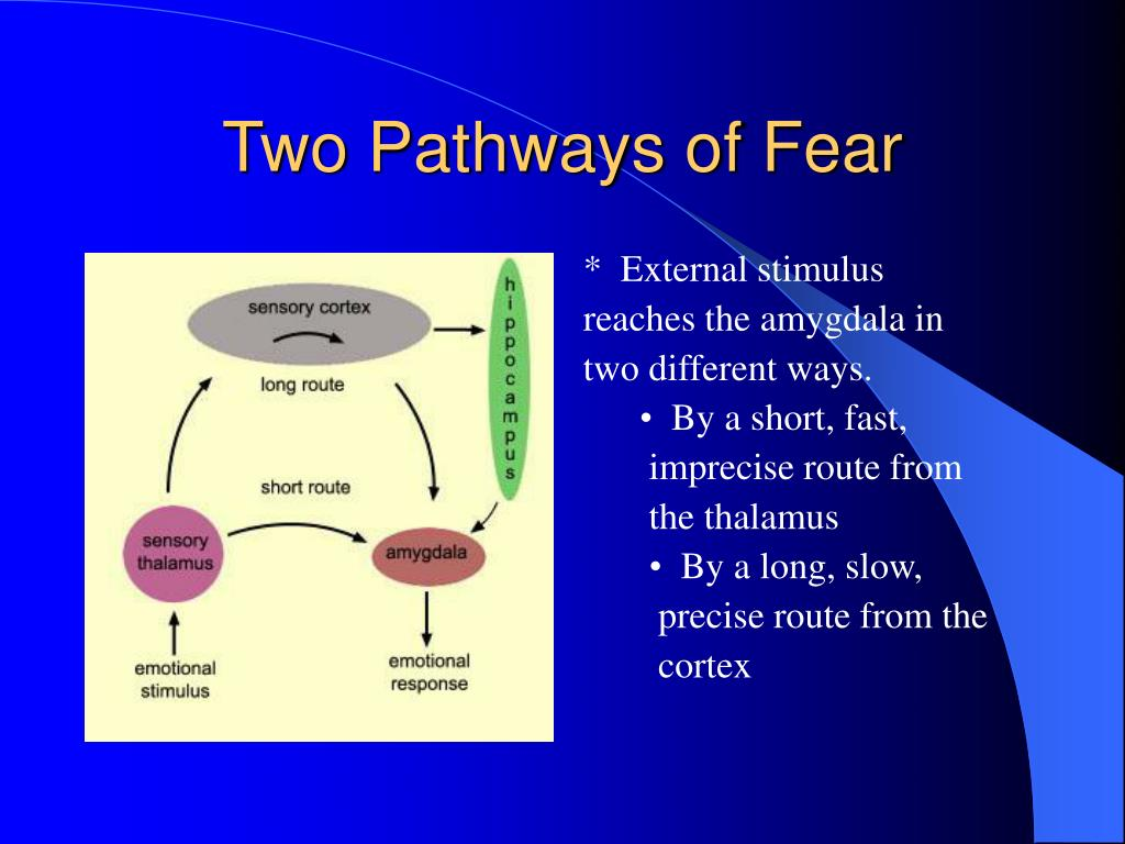 Two Pathways of Fear