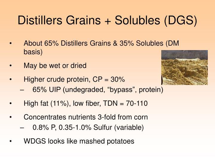 Distillers Grains + Solubles (DGS)