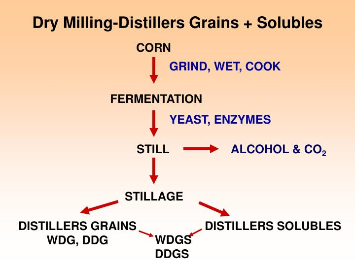Dry Milling-Distillers Grains + Solubles