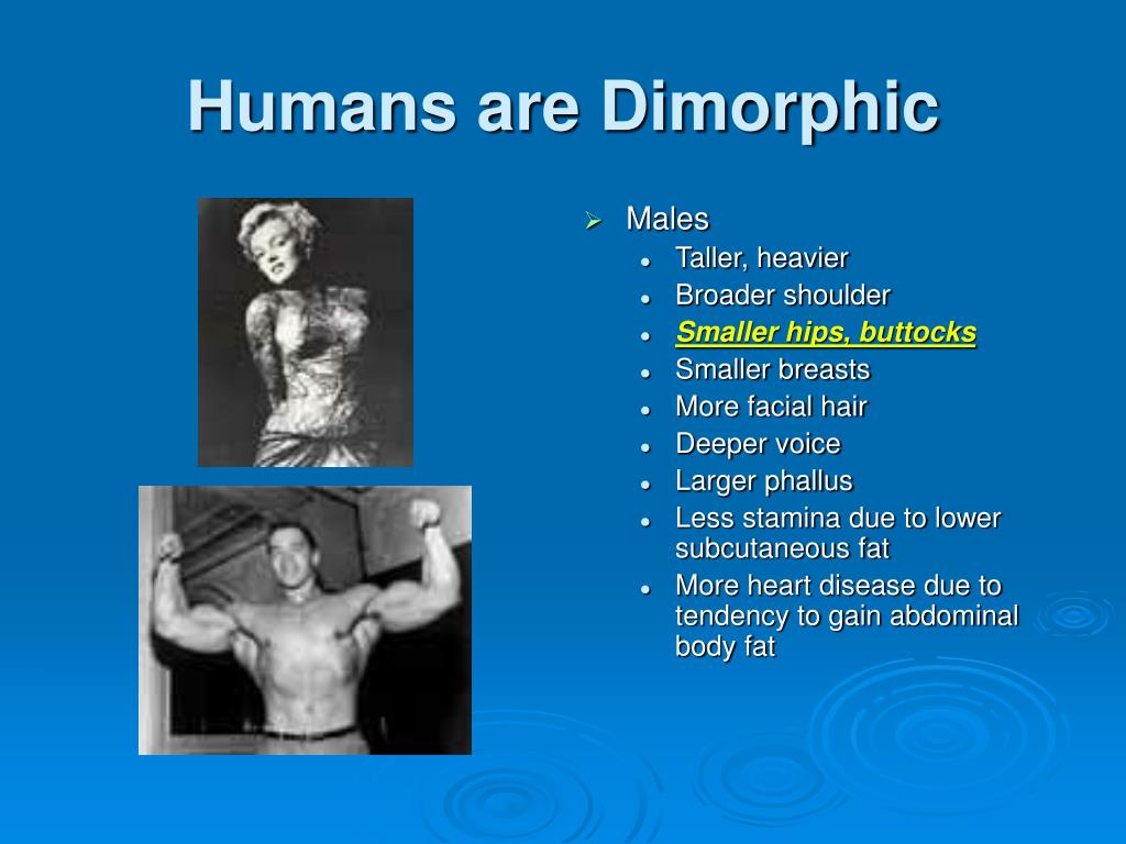 Humans are Dimorphic