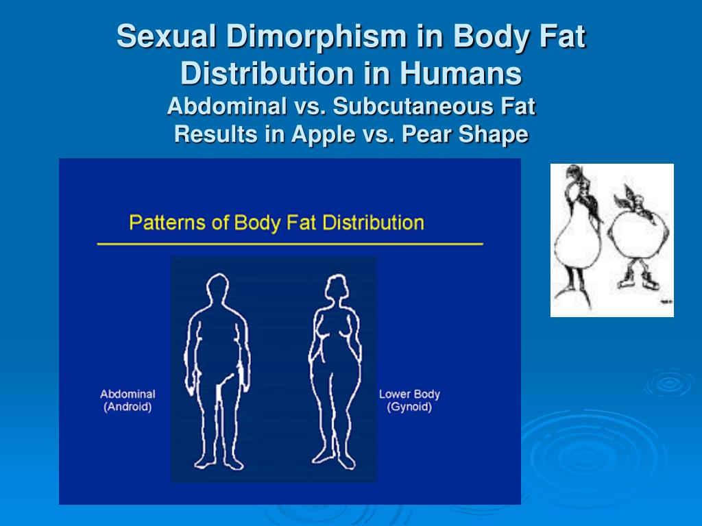 Sexual Dimorphism in Body Fat Distribution in Humans