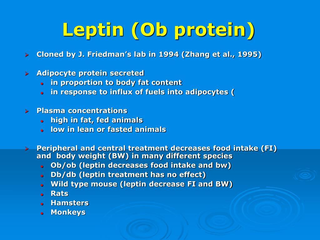 Leptin (Ob protein)