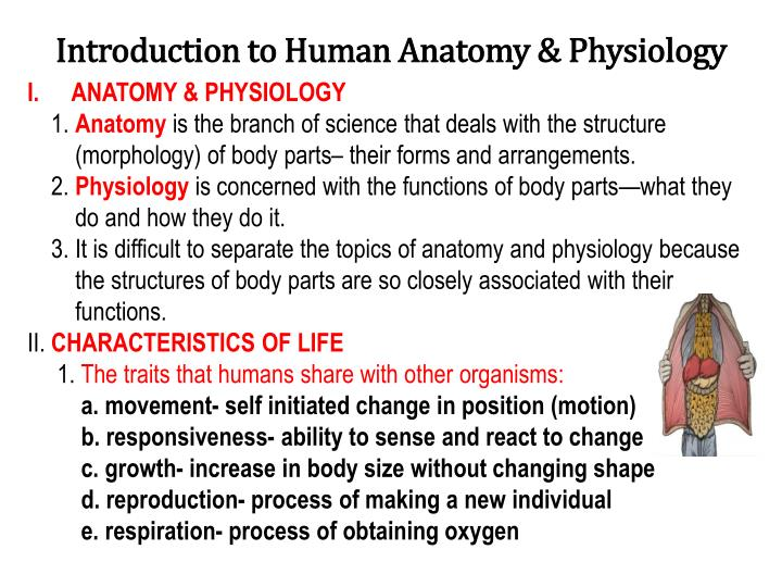 Introduction to human anatomy physiology
