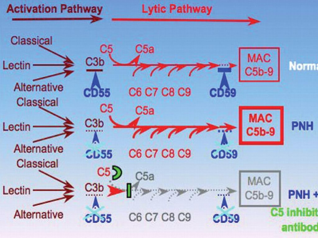 Complement activation and intravascular