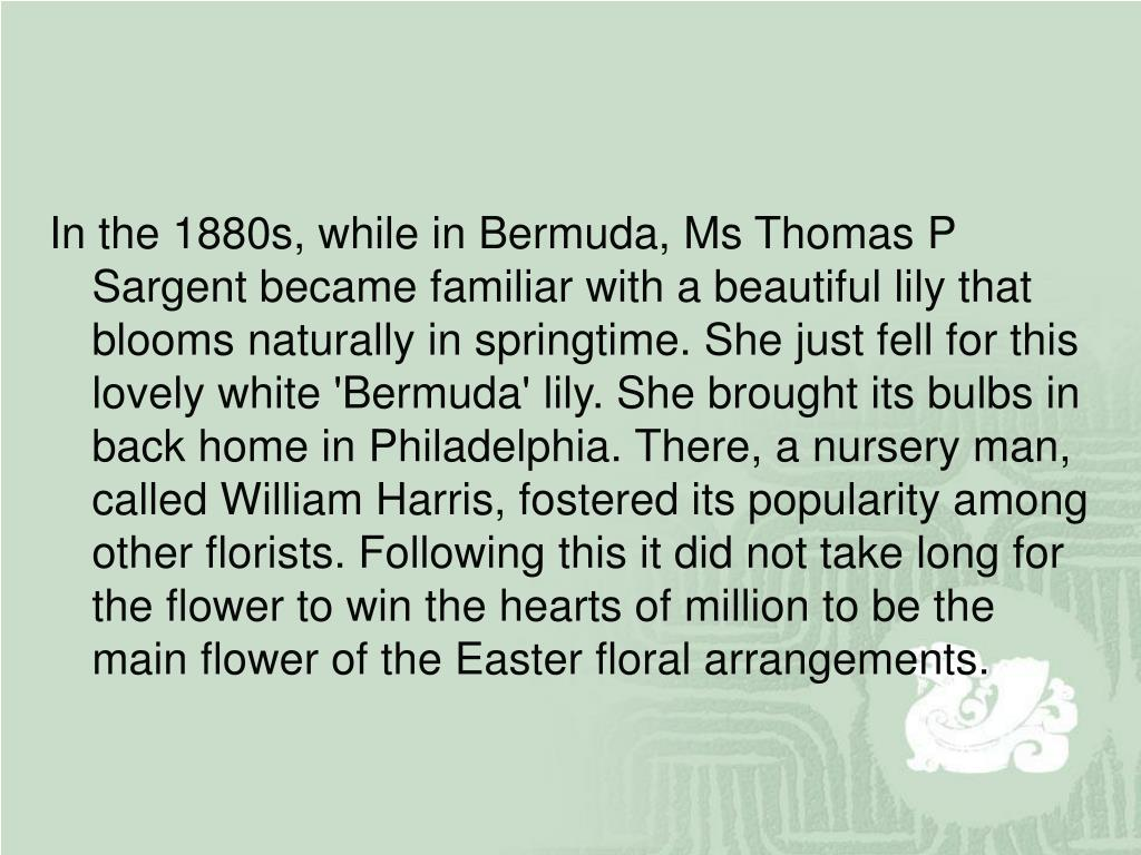 In the 1880s, while in Bermuda, Ms Thomas P Sargent became familiar with a beautiful lily that blooms naturally in springtime. She just fell for this lovely white 'Bermuda' lily. She brought its bulbs in back home in Philadelphia. There, a nursery man, called William Harris, fostered its popularity among other florists. Following this it did not take long for the flower to win the hearts of million to be the main flower of the Easter floral arrangements.