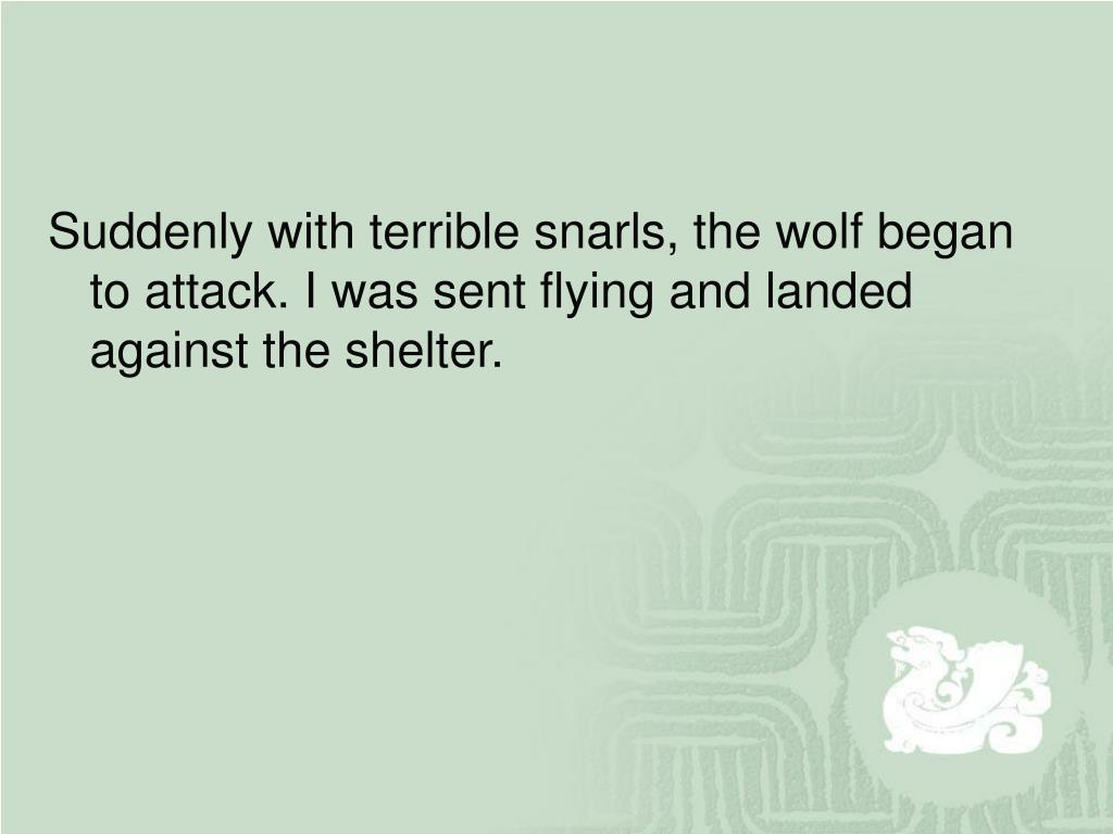 Suddenly with terrible snarls, the wolf began to attack. I was sent flying and landed against the shelter.