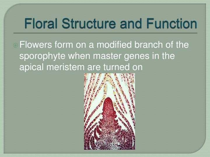 Floral structure and function l.jpg