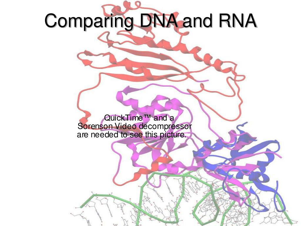 Comparing DNA and RNA