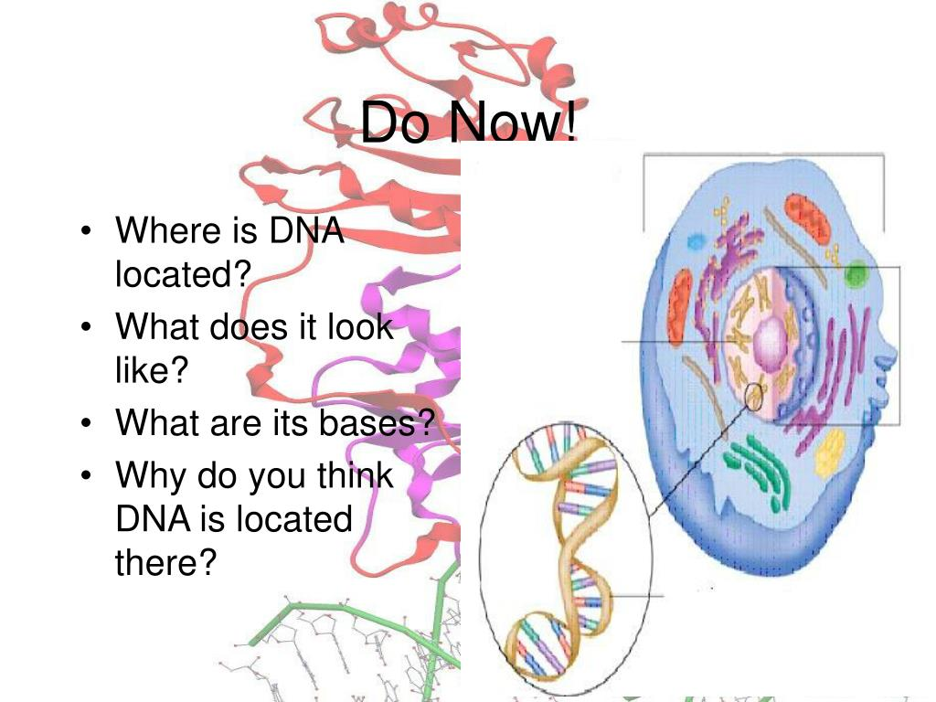 Where is DNA located?
