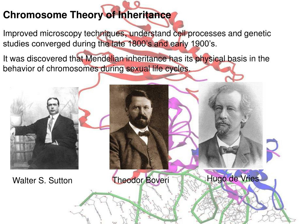 Chromosome Theory of Inheritance