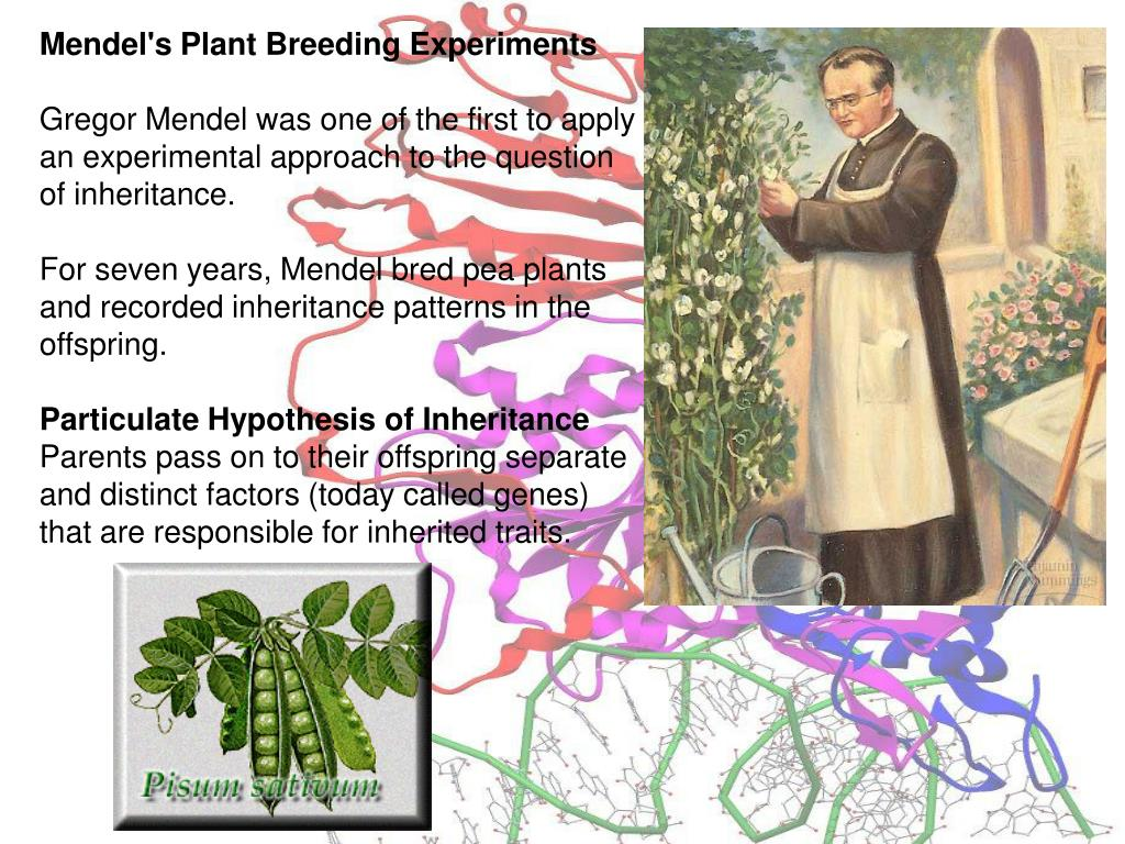 Mendel's Plant Breeding Experiments