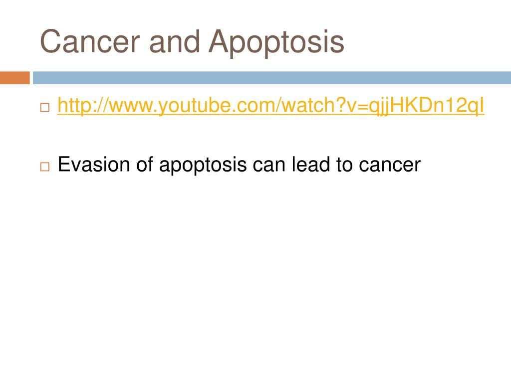 Cancer and Apoptosis
