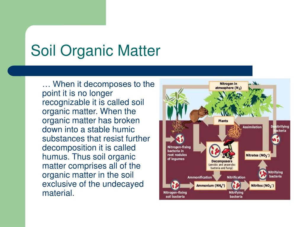 Ppt making your soil pure again powerpoint for Soil organic matter