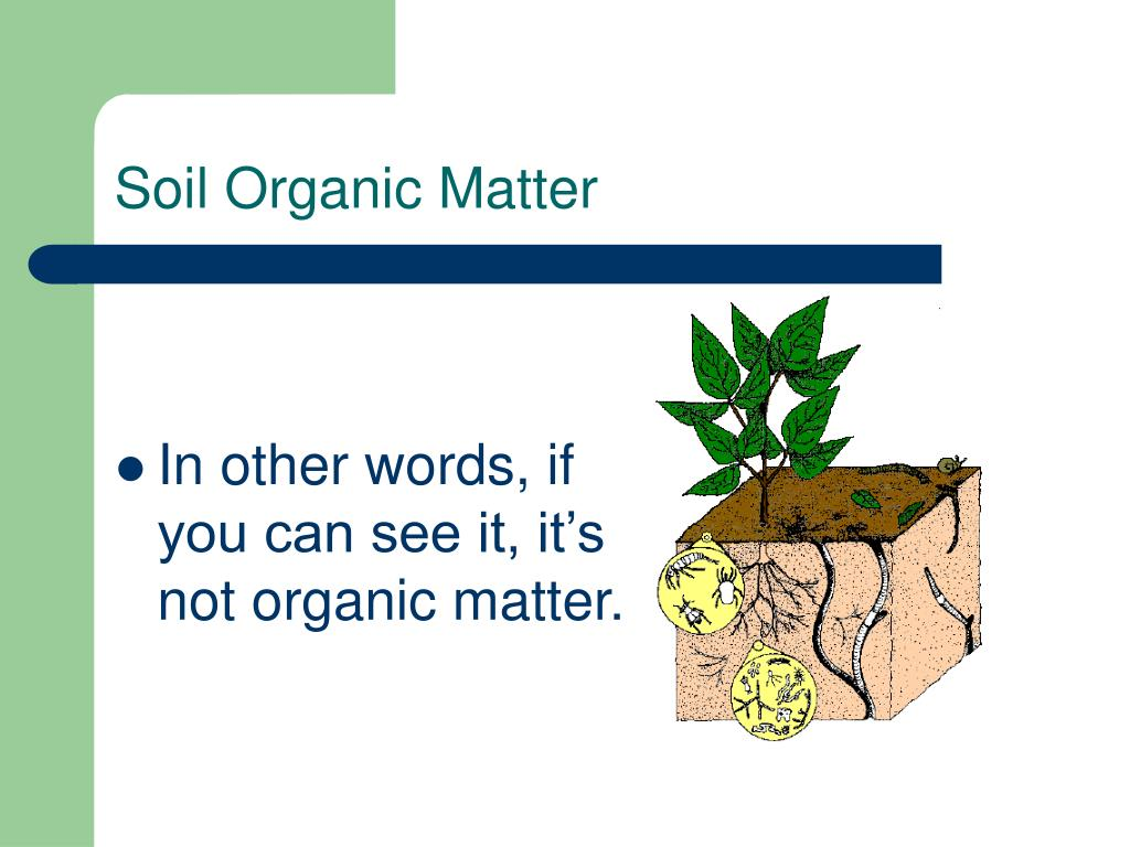 Ppt making your soil pure again powerpoint for Soil organisms