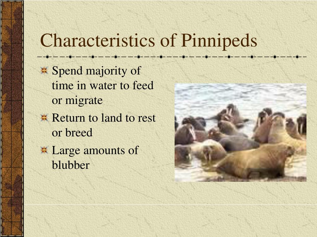Characteristics of Pinnipeds
