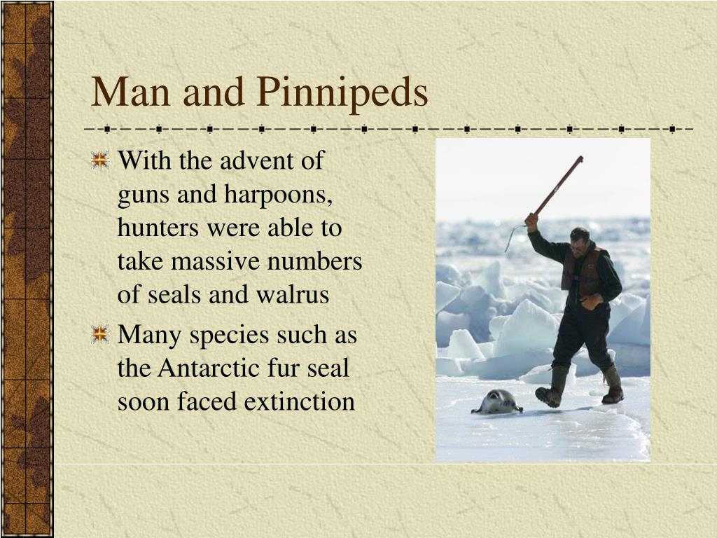 Man and Pinnipeds