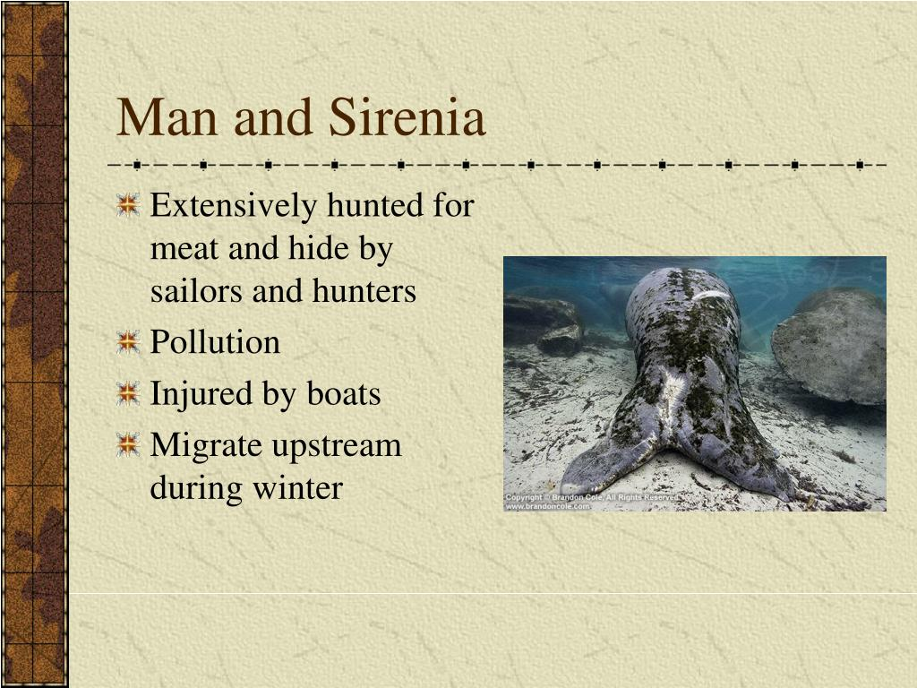 Man and Sirenia