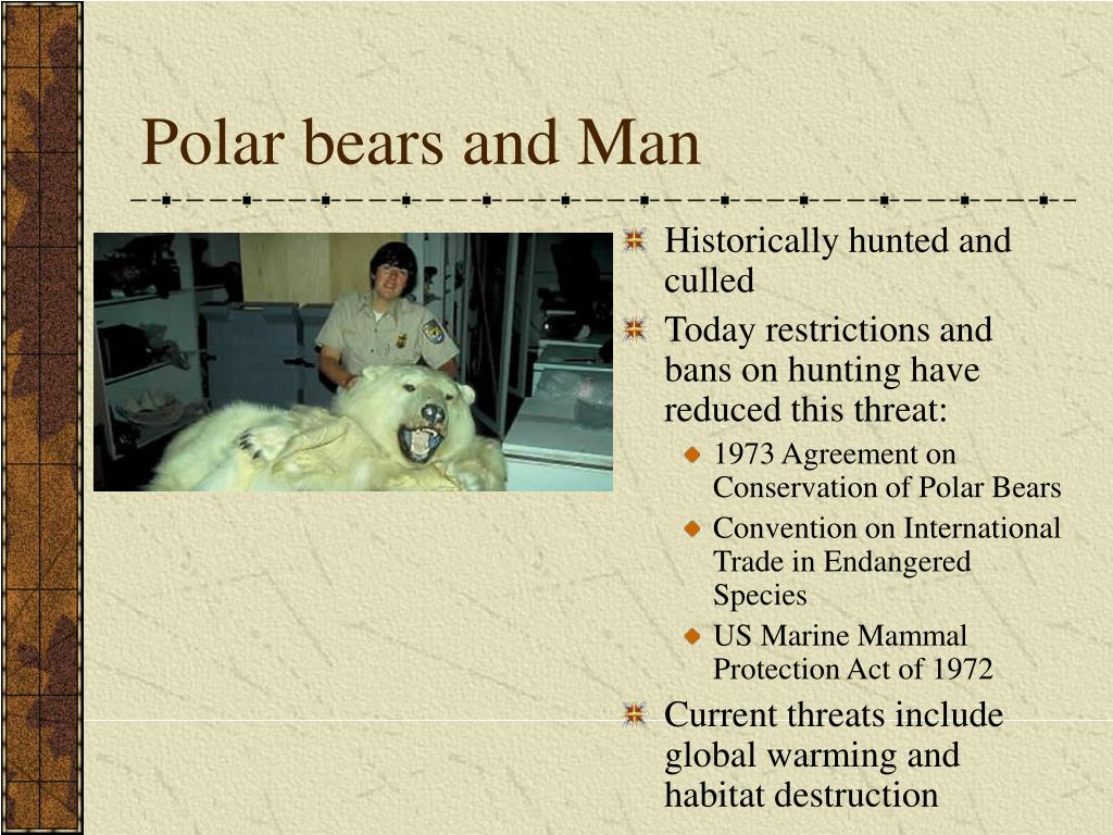 Polar bears and Man