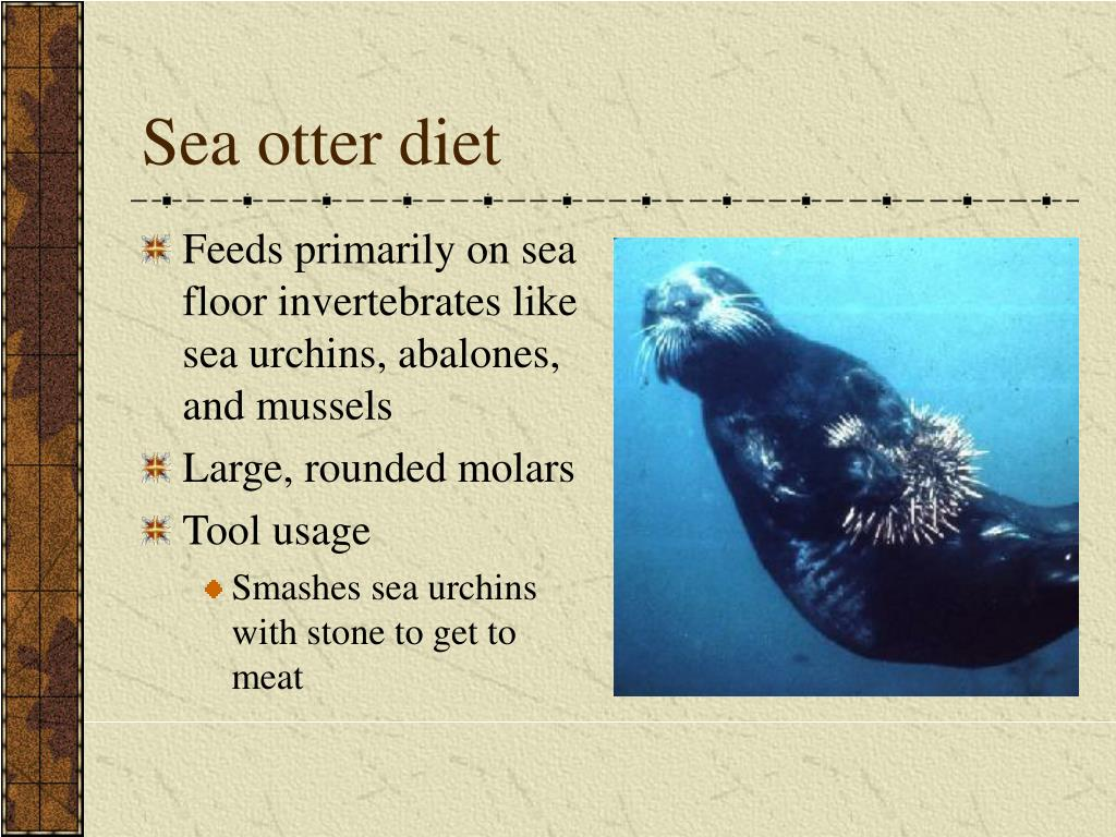 Sea otter diet