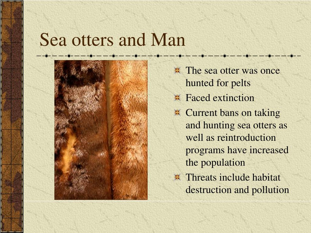 Sea otters and Man