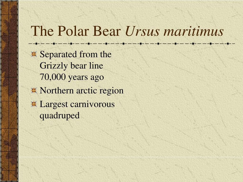 Separated from the Grizzly bear line 70,000 years ago