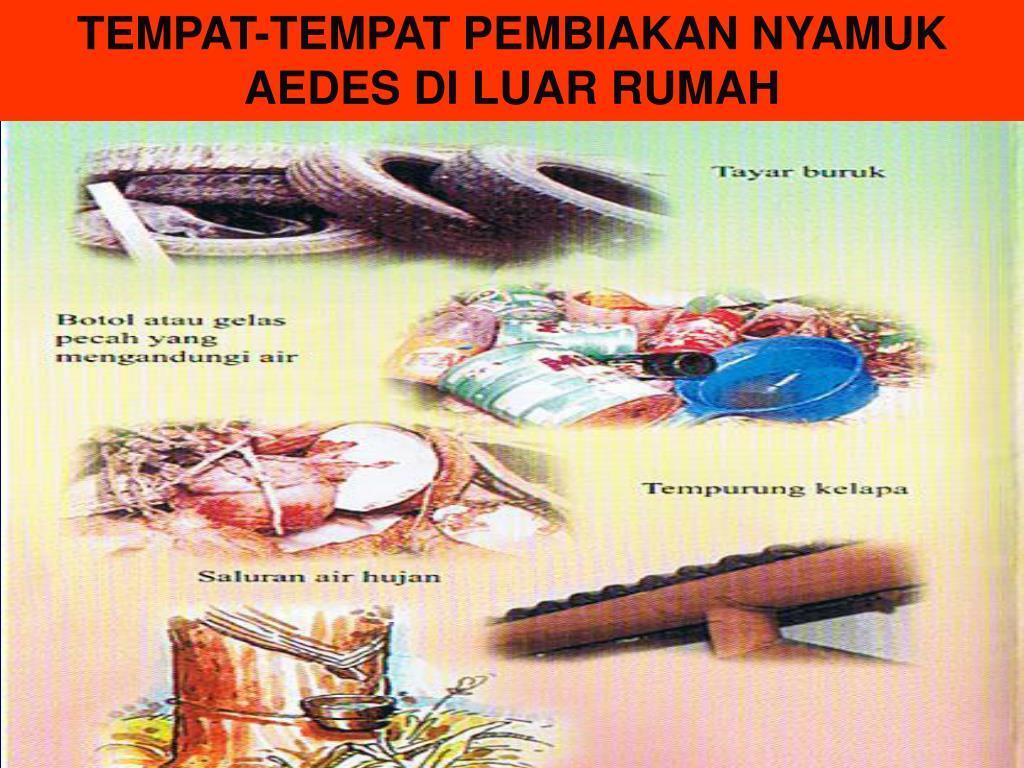TEMPAT-TEMPAT PEMBIAKAN NYAMUK AEDES DI LUAR RUMAH