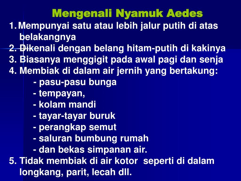 Mengenali Nyamuk Aedes