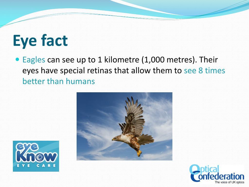 Eye fact