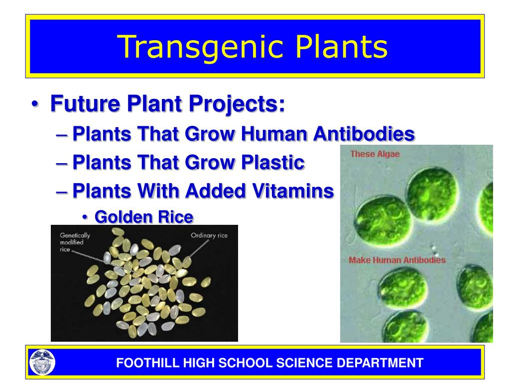 modified transgenic plants
