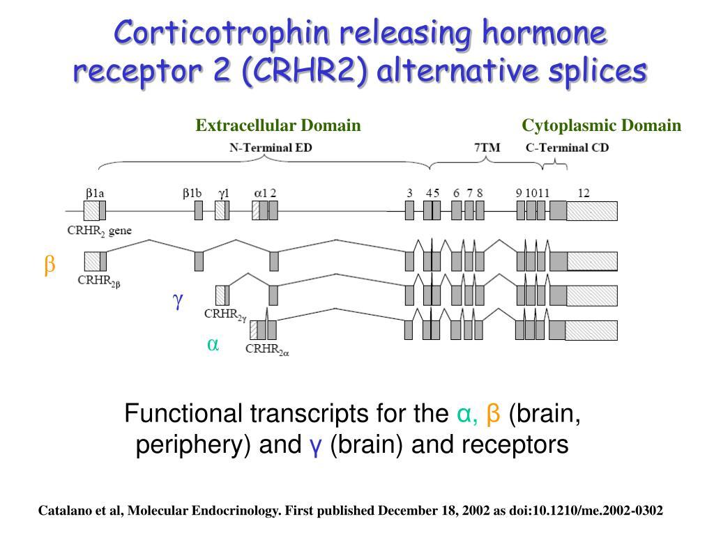 Corticotrophin