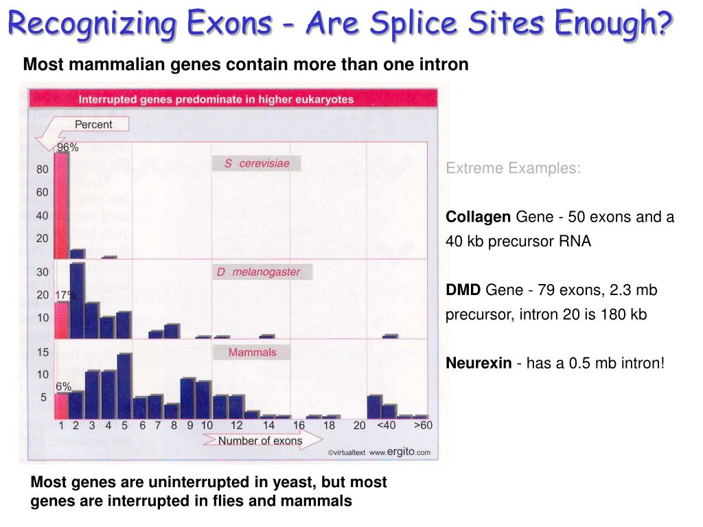 Recognizing Exons - Are Splice Sites Enough?