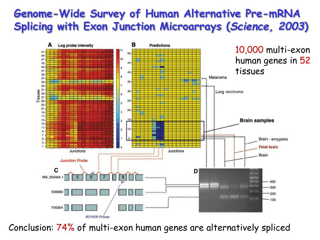 Genome-Wide Survey of Human Alternative Pre-mRNA Splicing with Exon Junction Microarrays (