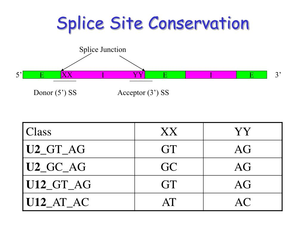 Splice Site Conservation