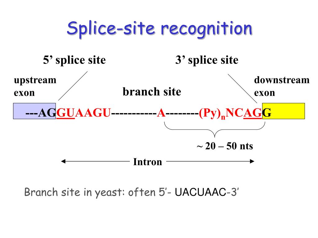 Splice-site recognition