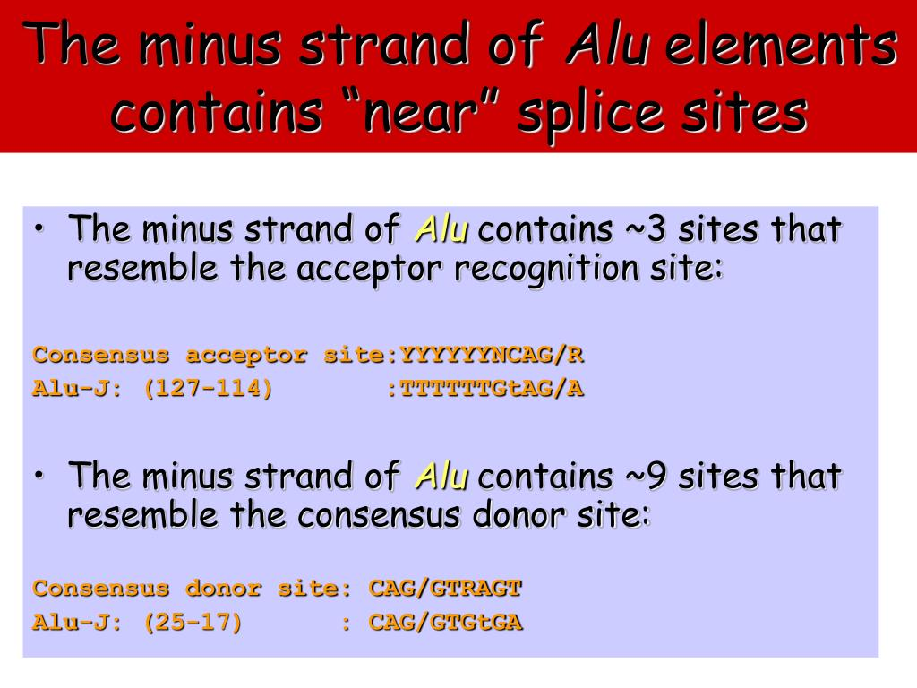 The minus strand of