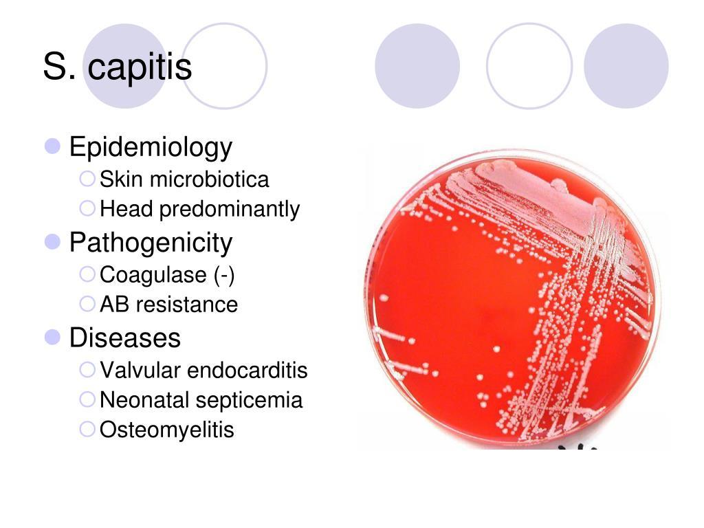 S. capitis