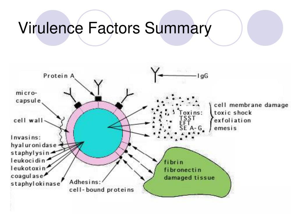 Virulence Factors Summary