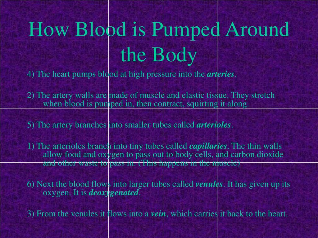 PPT - The Circulatory System And Exercise PowerPoint ...