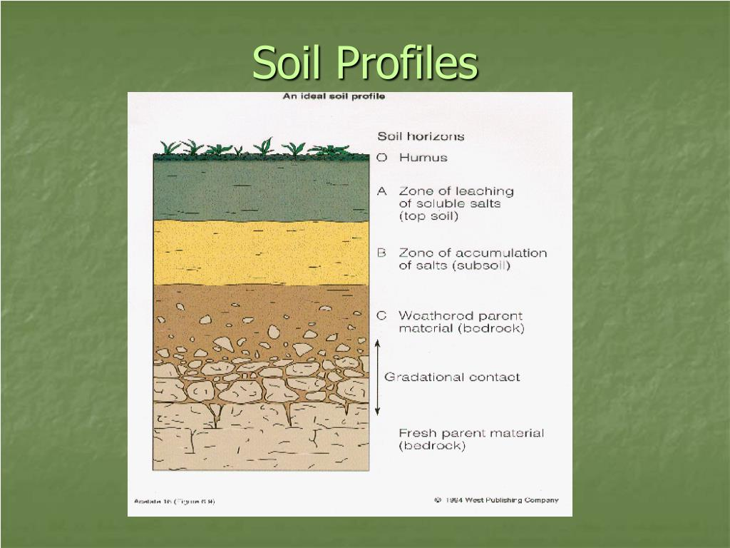 Ppt soils powerpoint presentation id 522039 for Soil profile video