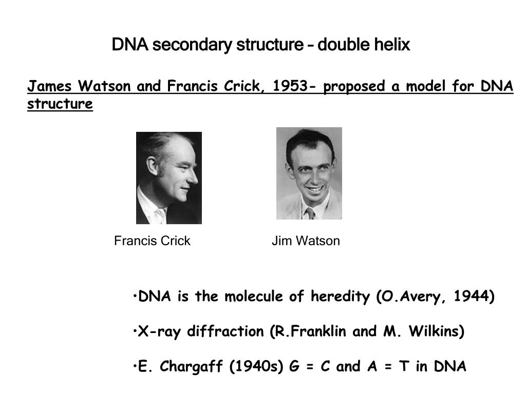 DNA secondary structure – double helix