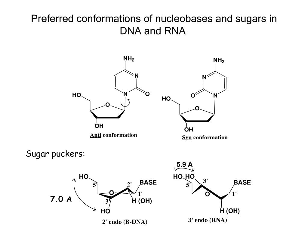 Preferred conformations of nucleobases and sugars in DNA and RNA