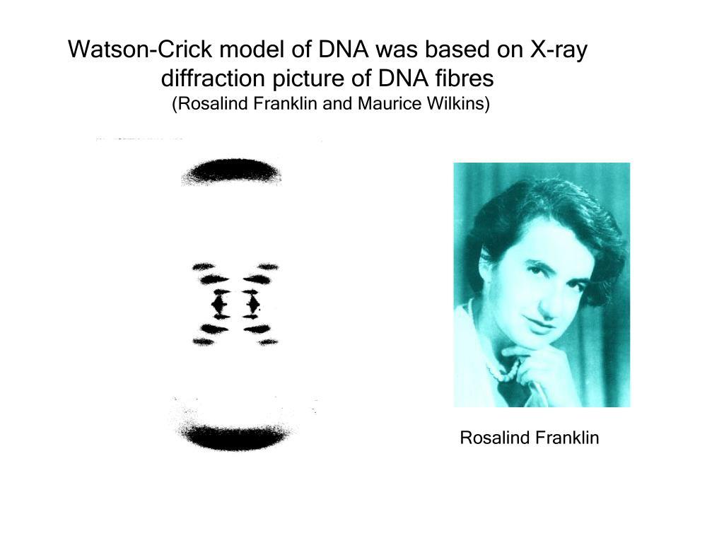 Watson-Crick model of DNA was based on X-ray