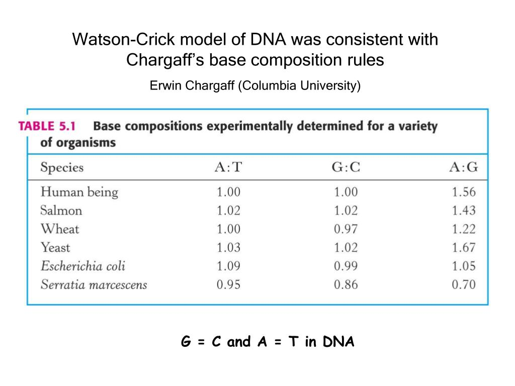 Watson-Crick model of DNA was consistent with Chargaff's base composition rules