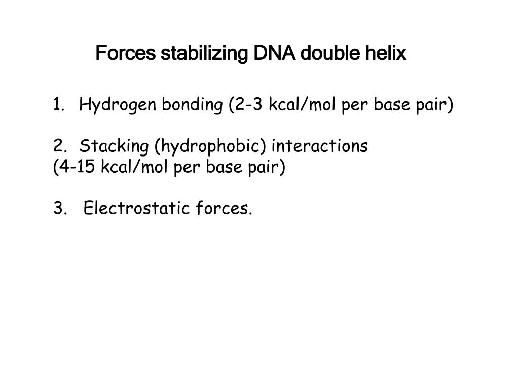 Forces stabilizing DNA double helix