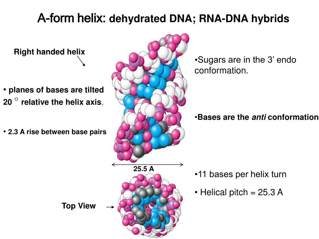 A-form helix: